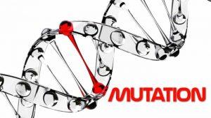 Apa Itu Mutasi Genetik ? Macam Contoh Dan Penyebab Mutasi Gen