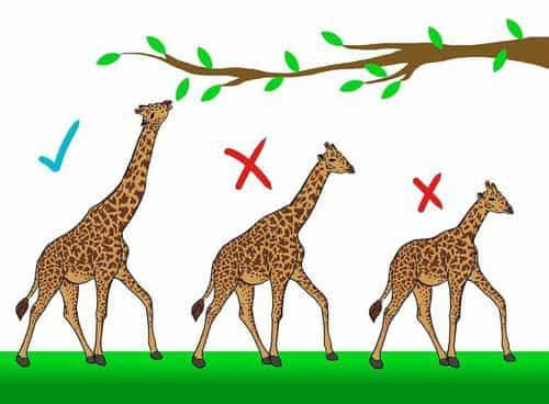 Faktor Yang Mempengaruhi Seleksi Alam - Pengertian Definisi Teori Dasar