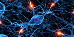 Pengertian Dan Sejarah Singkat Biologi Ilmu Sains Lengkap
