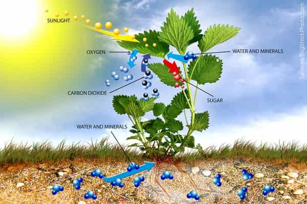 Proses Fotosintesis Pada Tumbuhan Artikel Komplit Download Pdf Mastah
