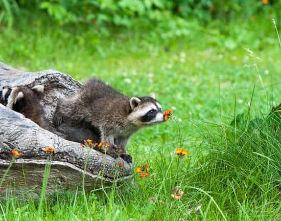 Mempelajari Cara Hewan Menggunakan Indera Penciuman
