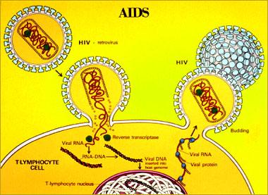 Obat-obatan yang telah ditemukan pada saat ini menghambat pengubahan RNA menjadi DNA dan menghambat pembentukan protein-protein aktif